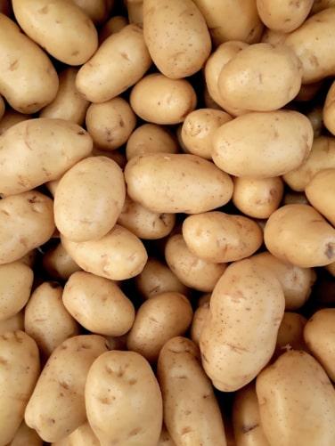 lokale kartofler nyopgravede kartofler nye kartofler