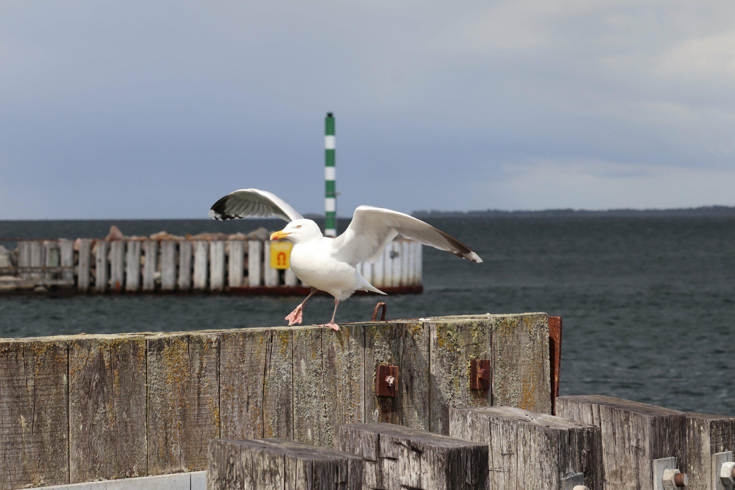 frisk fisk Havnsø Fisk fiskefilet rødspættefileter